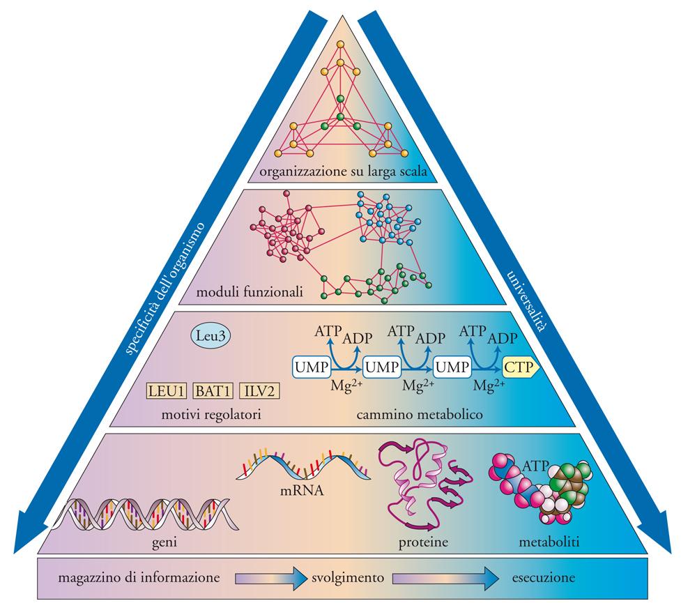Scale Delle Temperature Delle Cellule Sulle Scale