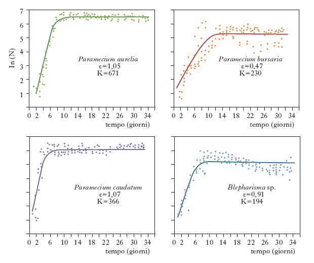 Schema vuoto profilo dinamico funzionale