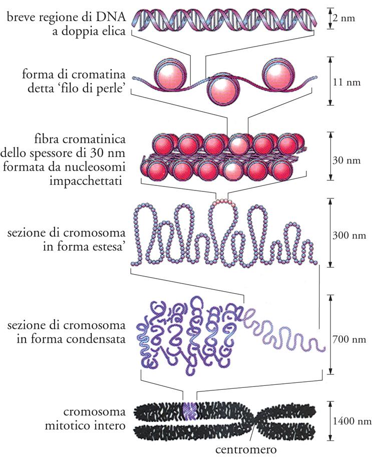 nuclic acid
