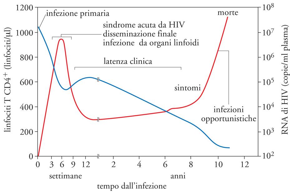 Hiv in enciclopedia della scienza e della tecnica - Periodo finestra test hiv ...