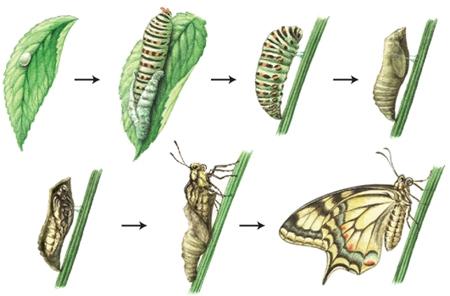 Farfalle In Enciclopedia Dei Ragazzi