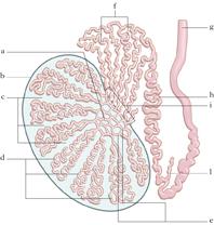 infiammatori steroidei