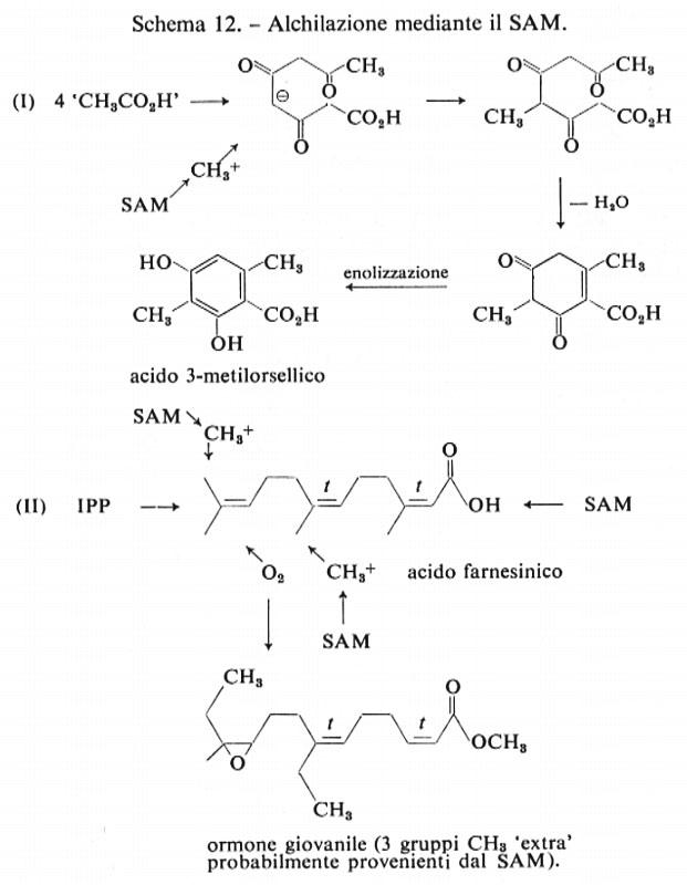 ormoni steroidei chimica farmaceutica