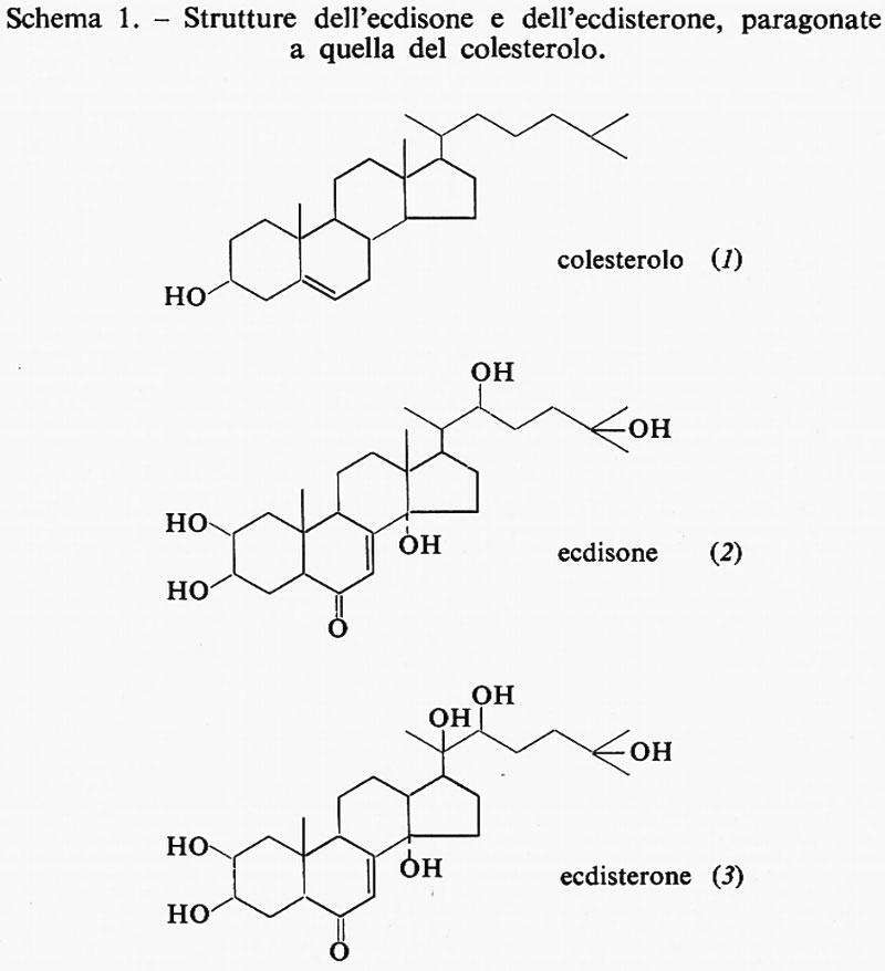 ormoni che influenzano la crescita del pene