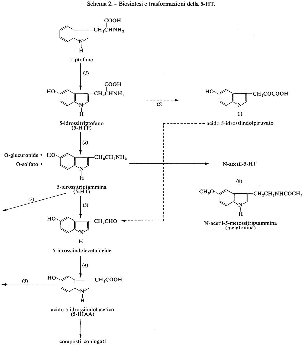 ormoni steroidei recettore