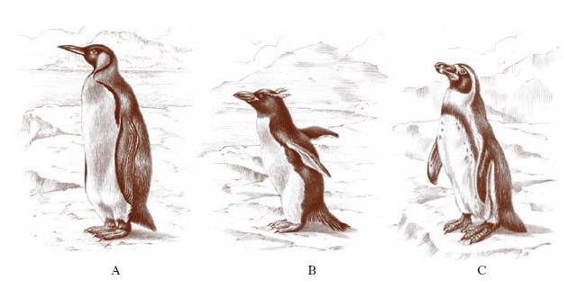 pinguino nell\'Enciclopedia Treccani