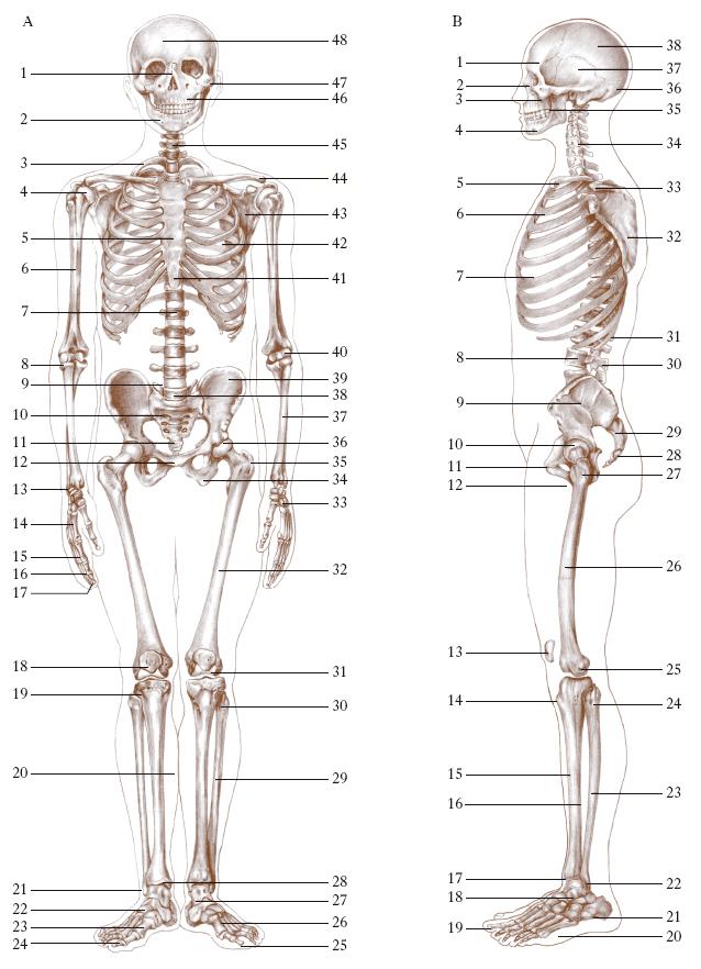Estremamente scheletro nell'Enciclopedia Treccani NB08
