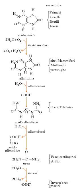 recomendaciones alimentarias para la gota acido urico signos y sintomas es bueno el zumo de tomate para el acido urico