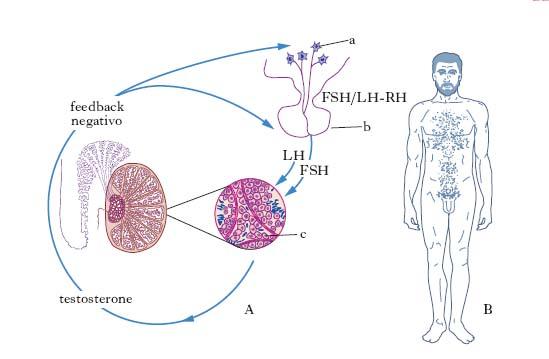 ciclo di steroidi